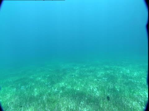 vídeos de stock e filmes b-roll de sunlight and shadows dapple a bed of seagrass in the bahamas. - sargaço
