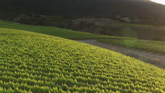 sonnenlicht und schatten an rebstöcken bedeckt hügel in santa lucia highlands, nordkalifornien - drohne schuss - traube stock-videos und b-roll-filmmaterial