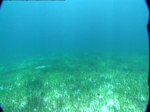 Sunlight and shadows play across a bed of seagrass in the Bahamas.