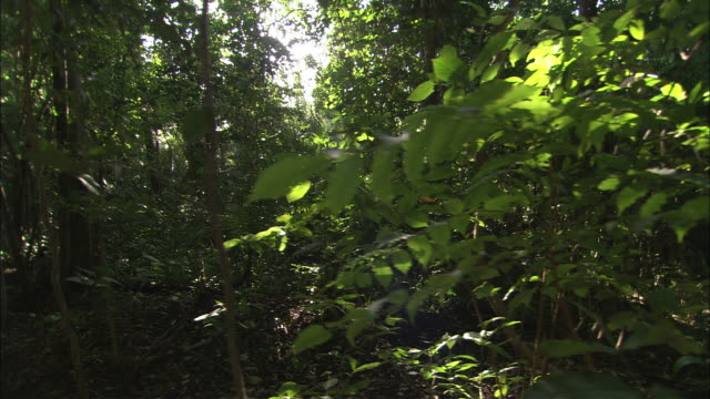 Sunlight beams through a forest in Belize.