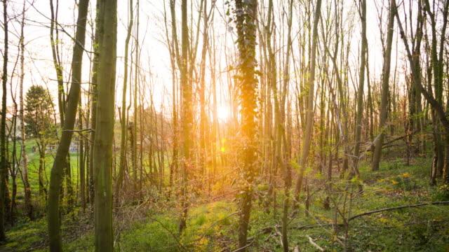 vídeos y material grabado en eventos de stock de luz solar parpadeando a través del bosque - disparo de seguimiento - back lit