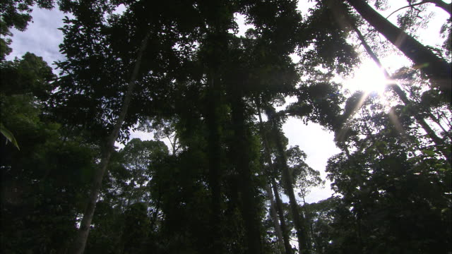 sunlight breaks through a forest canopy. - tree canopy stock videos & royalty-free footage