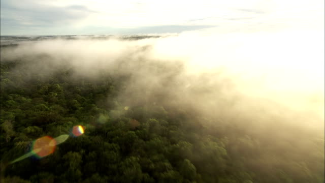sunlight burns through fog that settles over the amazon rainforest. available in hd. - copertura di alberi video stock e b–roll
