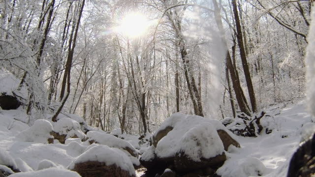 Sunlight bursts through snow covered trees - snow falls from the branches of trees