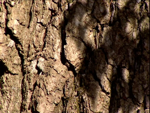 sunlight casts shadows of leaves on tree bark uk - plant bark stock videos and b-roll footage