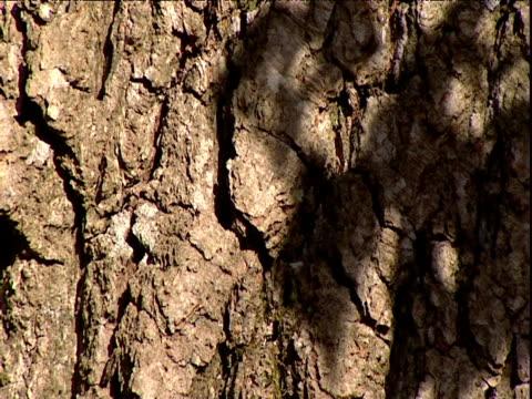 Sunlight casts shadows of leaves on tree bark UK