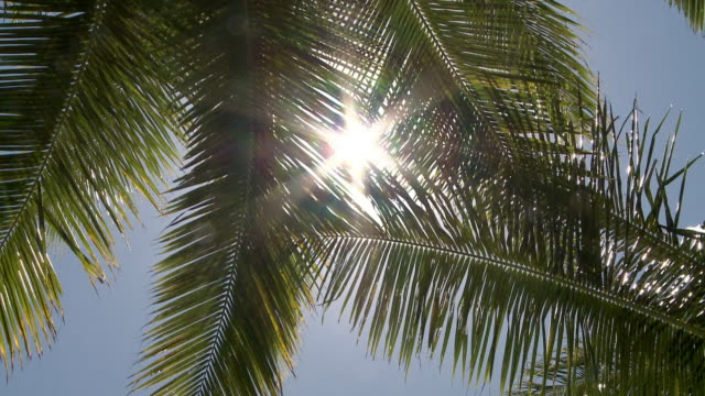 Sunlight coming through palm tree leaves