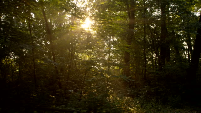 vídeos de stock, filmes e b-roll de ws luz do sol entrando através de árvores - raw footage
