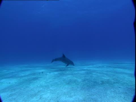 vídeos de stock e filmes b-roll de sunlight dapples a sandy seabed where a dolphin rises to the surface. - vir à superfície