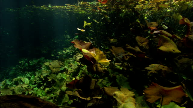 sunlight dapples a seaweed forest. - seaweed stock videos & royalty-free footage