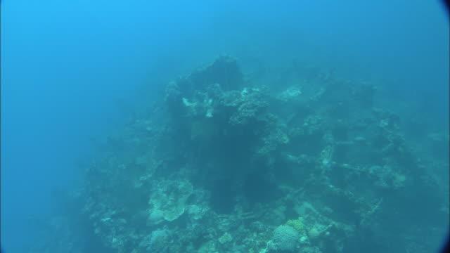 stockvideo's en b-roll-footage met sunlight dapples coral encrusted world war ii wreckage in the palau reef. - scheepswrak