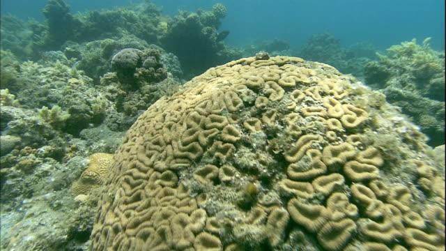 vídeos de stock, filmes e b-roll de sunlight dapples corals in the bonin islands. - ponto de vista de mergulhador