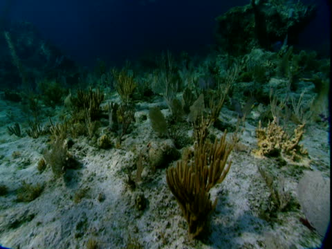 sunlight dapples corals on a shallow, sandy seabed. - history点の映像素材/bロール