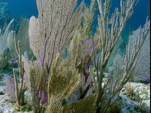 sunlight dapples delicate fan corals. - history点の映像素材/bロール