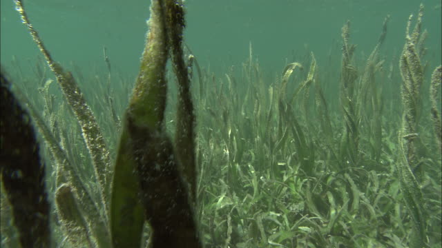 sunlight dapples seaweed in the palau reef, palau. - seaweed stock videos & royalty-free footage