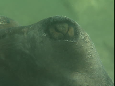 sunlight dapples the eye of a stingray. - southern stingray stock videos and b-roll footage