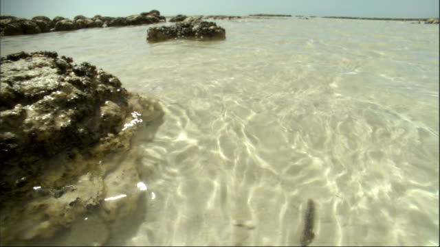 Sunlight dapples the shallow waters of Shark Bay. Available in HD.