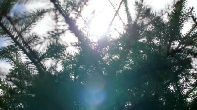 sunlight/ debica/ poland - podkarpackie voivodeship video stock e b–roll
