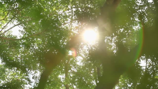 vídeos de stock, filmes e b-roll de sunlight falling between the trees - parélio