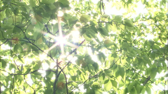 sunlight filters through leafy oak branches. - 木漏れ日点の映像素材/bロール