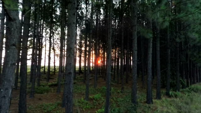 Sunlight glinting through forest landscape, Mpumalanga, South Africa