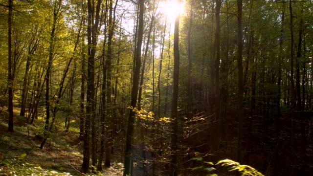 vídeos de stock, filmes e b-roll de ws luz solar iluminado a floresta de outono - raw footage