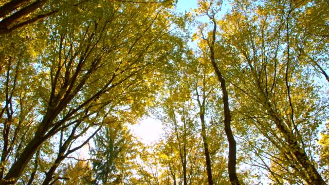 vídeos de stock, filmes e b-roll de ws luz solar iluminado as copas das árvores - raw footage