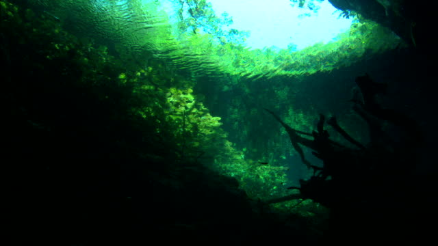 sunlight illuminates a seaweed forest. - seaweed stock videos & royalty-free footage