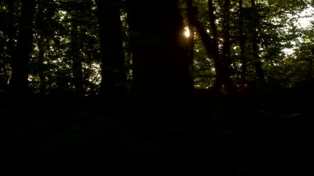 vídeos de stock, filmes e b-roll de ws luz do sol em uma floresta escura - raw footage