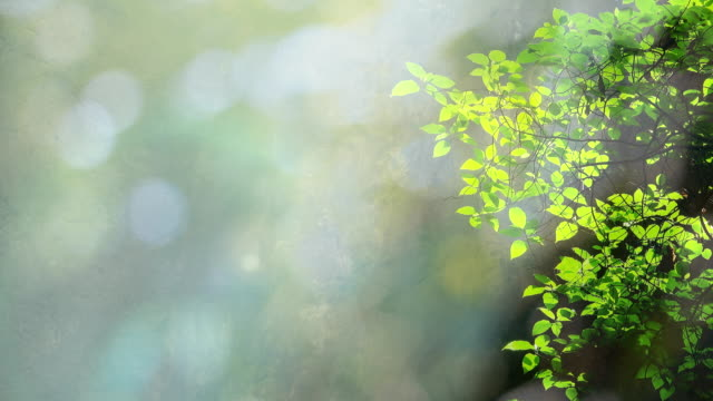 Sunlight In Green nature background