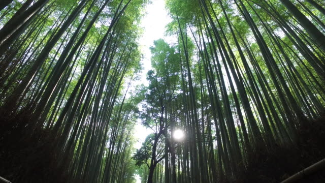 sunlight in the kyoto bamboo forest - kyoto stock videos and b-roll footage