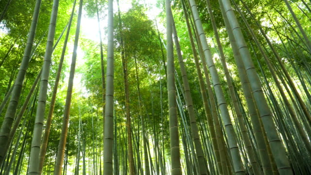 sunlight is coming while walking in arashiyama bamboo forest in kyoto, japan - bamboo plant stock videos and b-roll footage