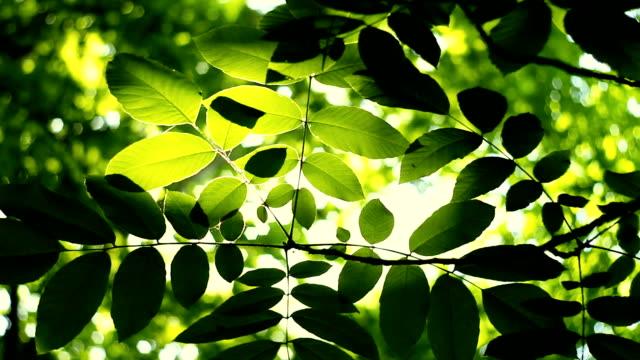 Luz del sol caiga la lente a través de hojas de árbol verde