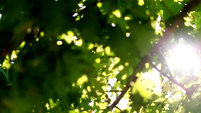 太陽の光が発表したレンズを通してグリーンツリーの葉