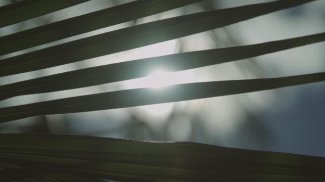 sunlight leaking through palm leaves. - palm leaf stock videos & royalty-free footage