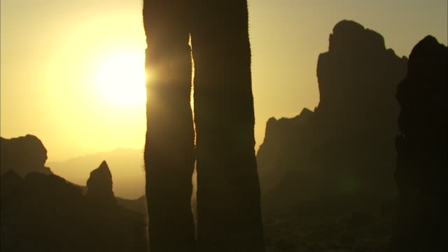 sunlight leaves saguaro cactus in silhouette - cactus silhouette stock videos & royalty-free footage