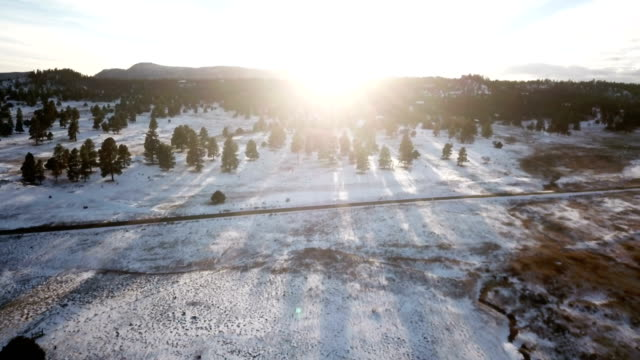 sunlight making tall pines cast long shadows over snowy landscape - colorado stock videos & royalty-free footage