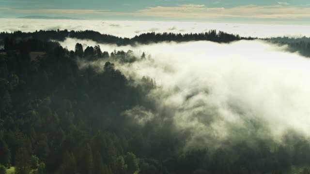 sunlight on fog over redwood forest - aerial - sequoia stock videos & royalty-free footage