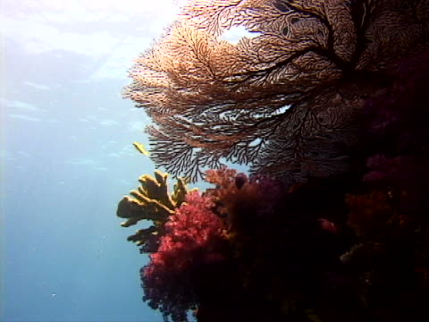 sunlight on living corals and sea fans - tierisches exoskelett stock-videos und b-roll-filmmaterial