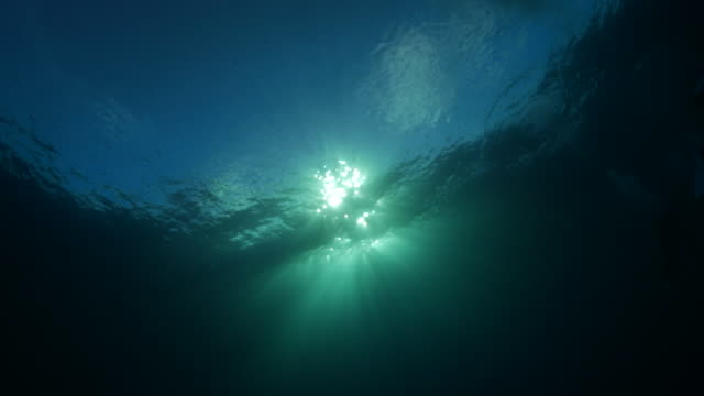 sunlight on sea surface - underwater stock videos & royalty-free footage