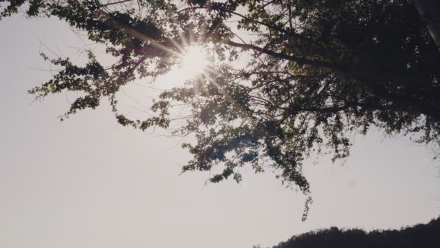 sunlight on the trees. - trust stock videos & royalty-free footage
