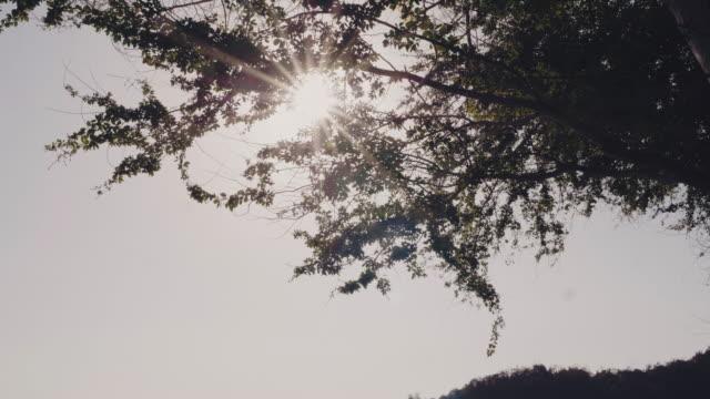 solljus på träden. - trust bildbanksvideor och videomaterial från bakom kulisserna