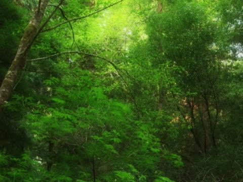 Sunlight on treetops