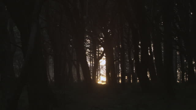 MONTAGE Sunlight peeking through forest of dark, barren trees / Hawaii, United States