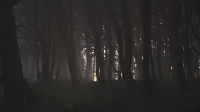 zi sunlight peeking through forest of dark, barren trees, showing the way out / hawaii, united states - ominous stock videos & royalty-free footage