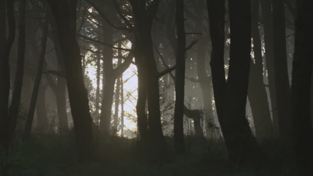 MONTAGE Sunlight peeking through forest of dark, barren trees, showing the way out / Hawaii, United States