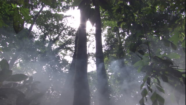 sunlight penetrates the rainforest canopy in sabah, borneo. available in hd. - copertura di alberi video stock e b–roll