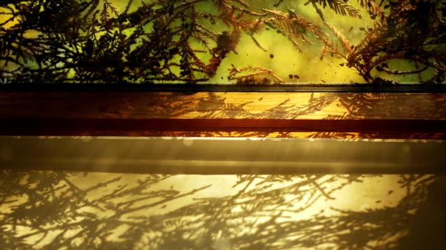 Luce solare penetra attraverso la finestra