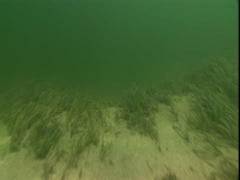 vídeos de stock, filmes e b-roll de sunlight plays across a sandy, weedy seabed. - grosso
