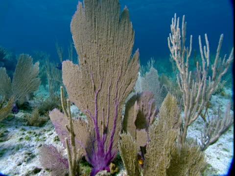 sunlight plays across beautiful fan corals in shallow atlantic waters. - history点の映像素材/bロール